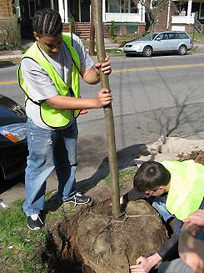 Urban Resources Initiative planting a tree.