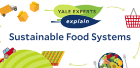 sustainable food systems header with farm to table illustration